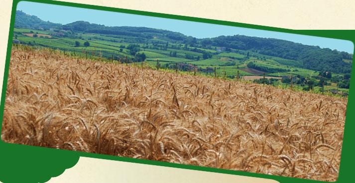 Azienda Agricola Bisognin